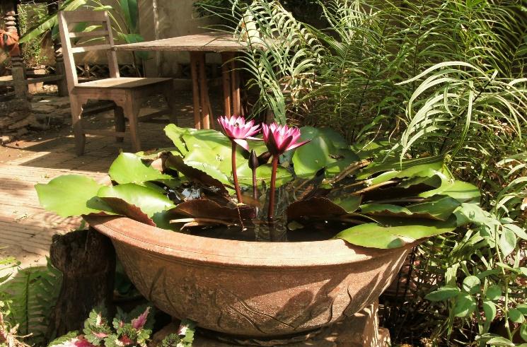 Lotus in bloei